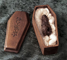 Mandrake root - mandragora officinarum in mahogany coffin